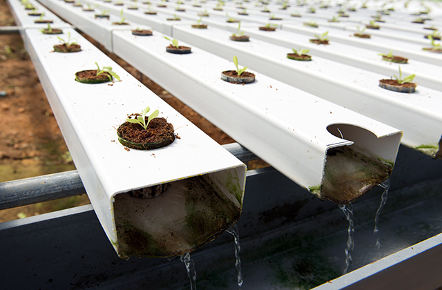 Nutrient Film Technique (NFT) Hydroponic Systems